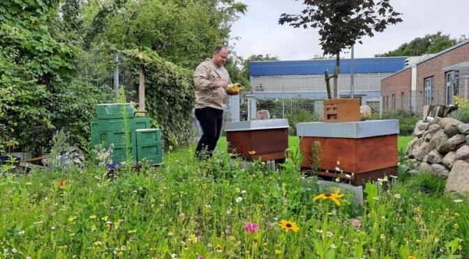 Bienen summen zum Motorenbrummen